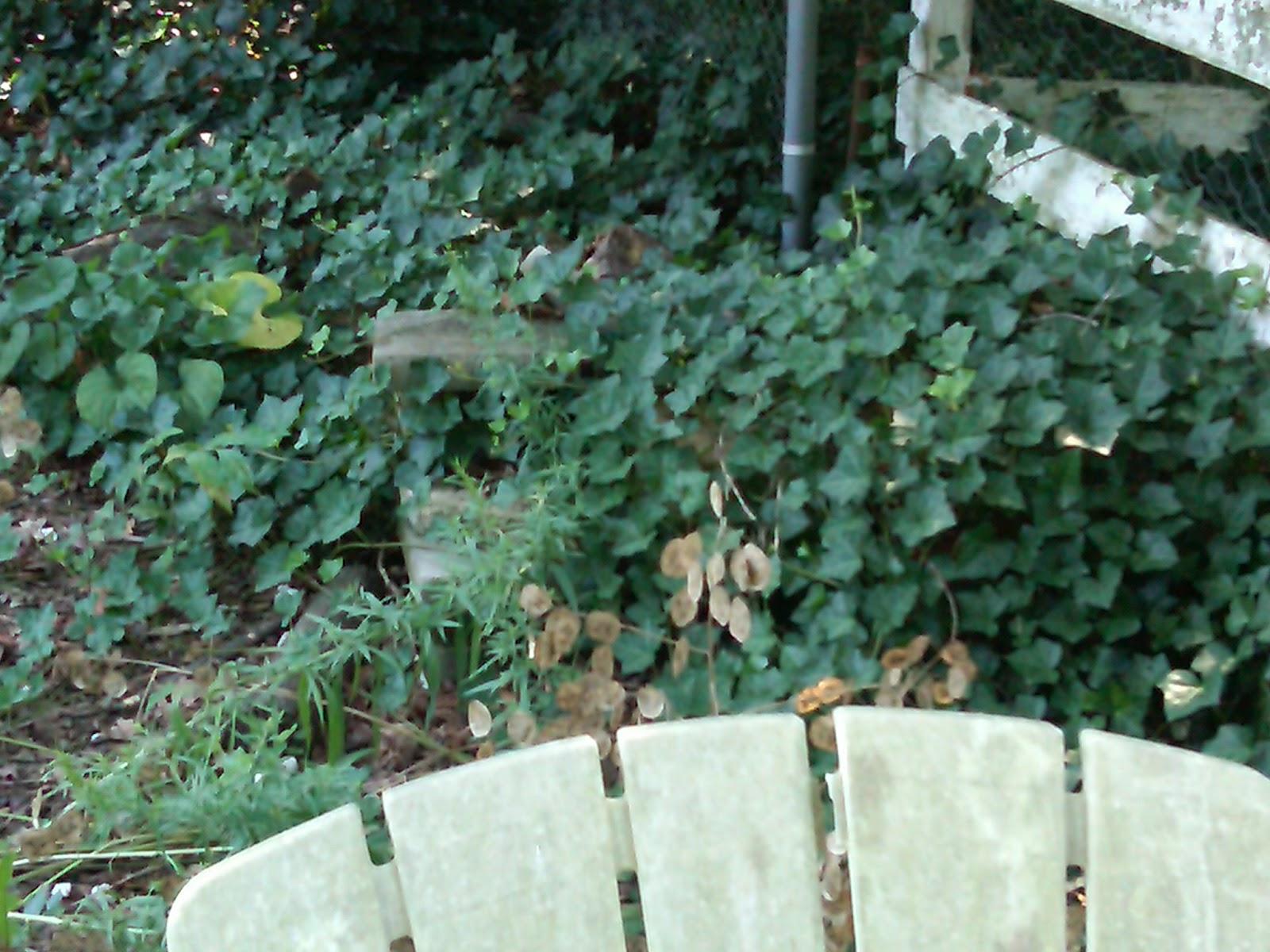The Suburban Challenge: My Garden Makeover