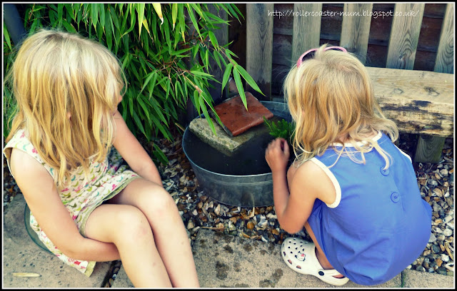 make a mini pond RSPB #homesforwildlife