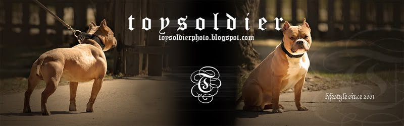 TOYSOLDiER BULLY PHOTOS