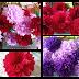 DIY: Bunga Crepe