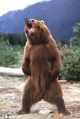 [Image: bear+roar.jpg]