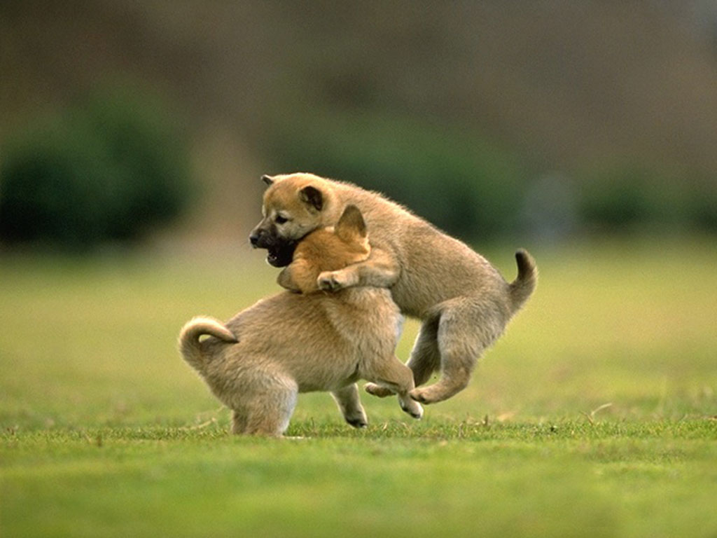 cute animal friendship wallpapers with quotes quotesgram