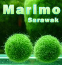 Selling Marimo!