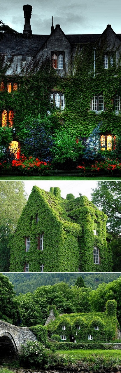 Ivy Covered Houses