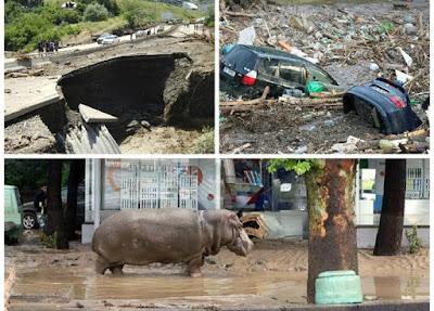 Escapan decenas de animales del zoologia de Georgia tras graves inundaciones