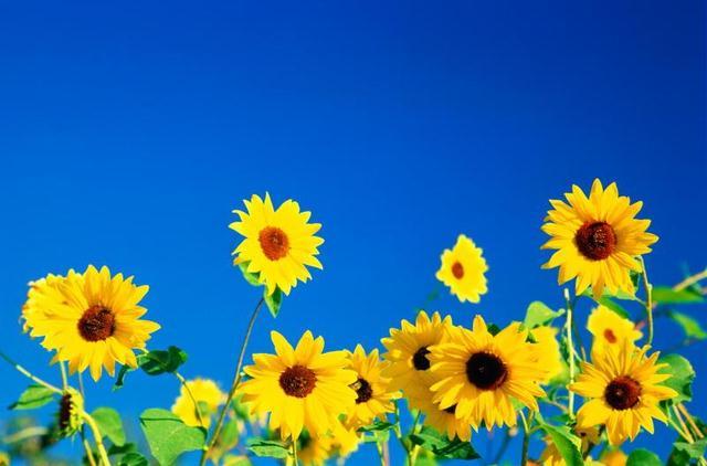 Flower Full Of Life