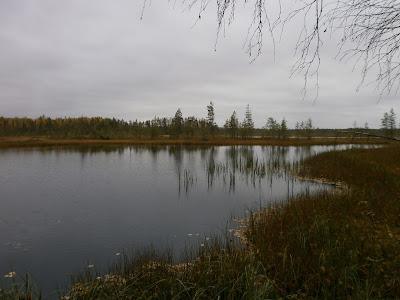 Клюква на Болотном озере в Мозолово у Карпа - карпалот