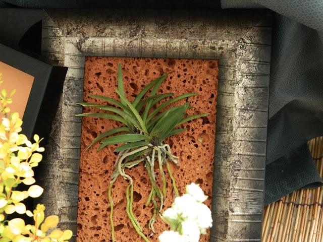 Framed plant!