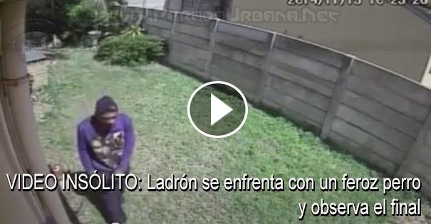 VIDEO INSÓLITO: Ladrón se enfrenta a un feroz perro y observa que sucedio