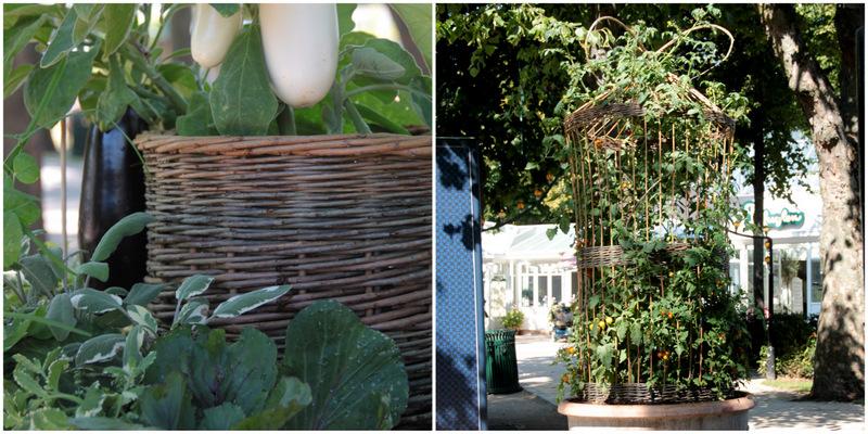 Grøntsager i Tivoli i august