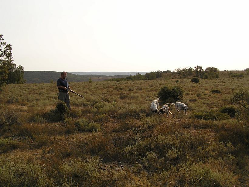 Compañeros de caza y perros