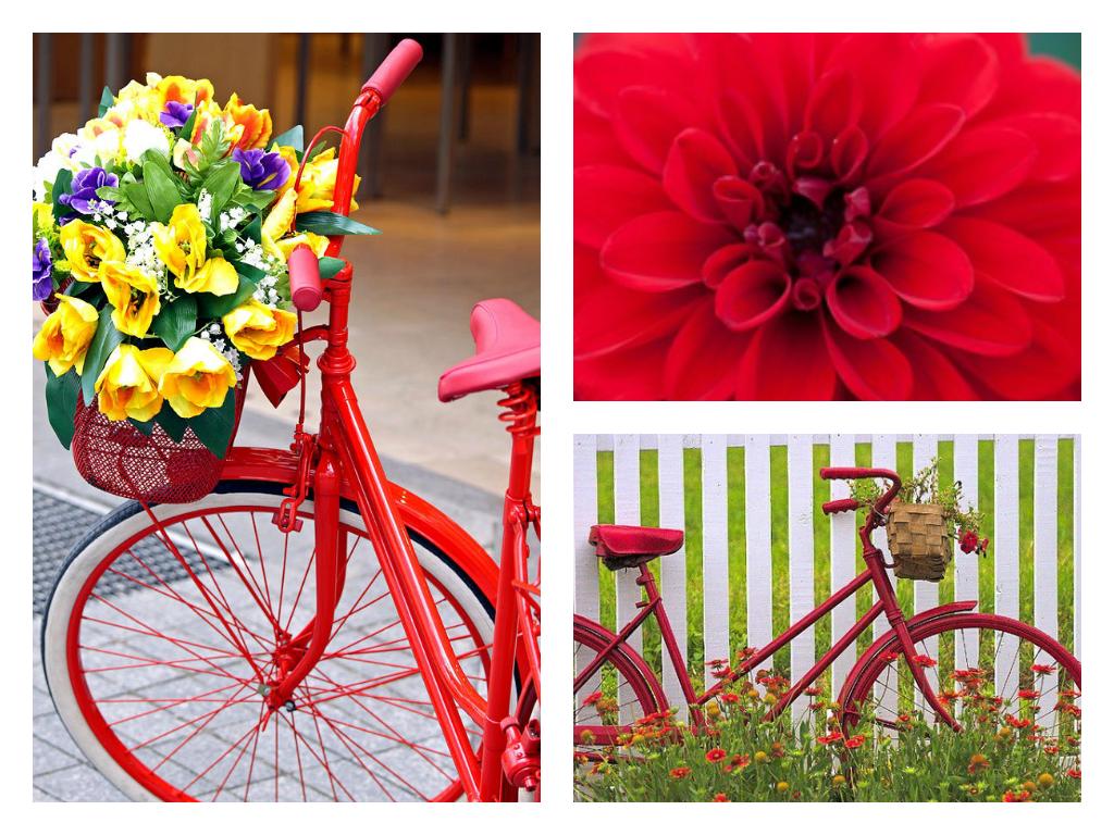 Photos With Flower Garden Decoration Ideas