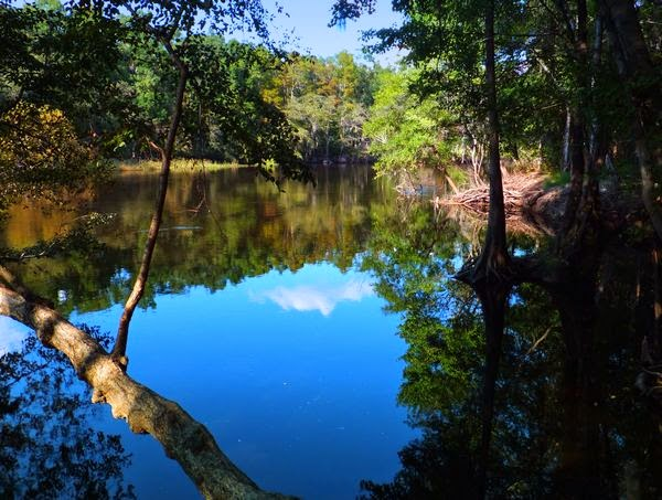 Colleton State Park in South Carolina on the Edisto River