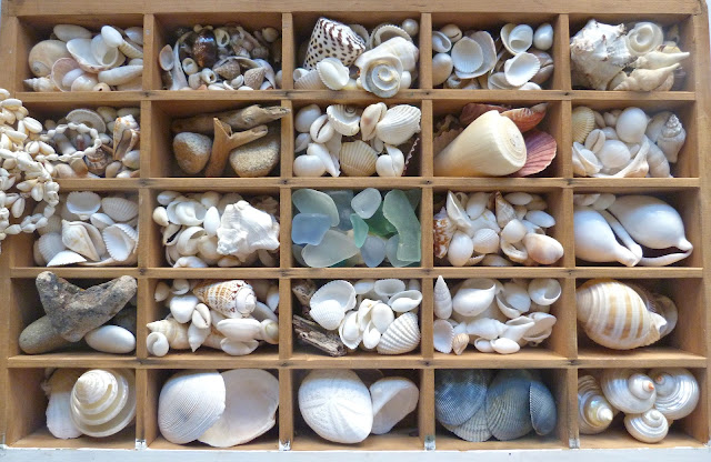 sea shell sorting ideas including vintage printer tray