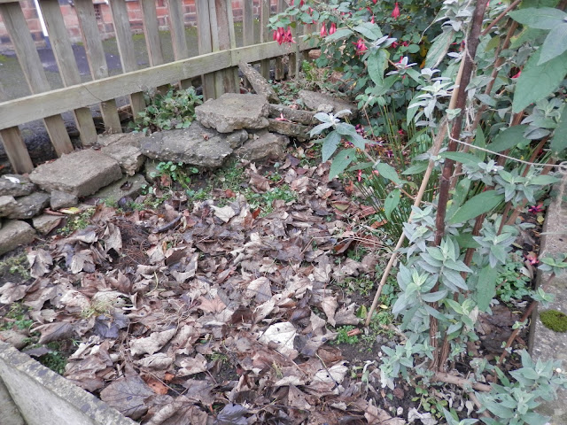 Mulching with fallen leaves.  My garden, January 2016. secondhandsusie.blogspot.co.uk #gardenblogger #ukblogger #gardening