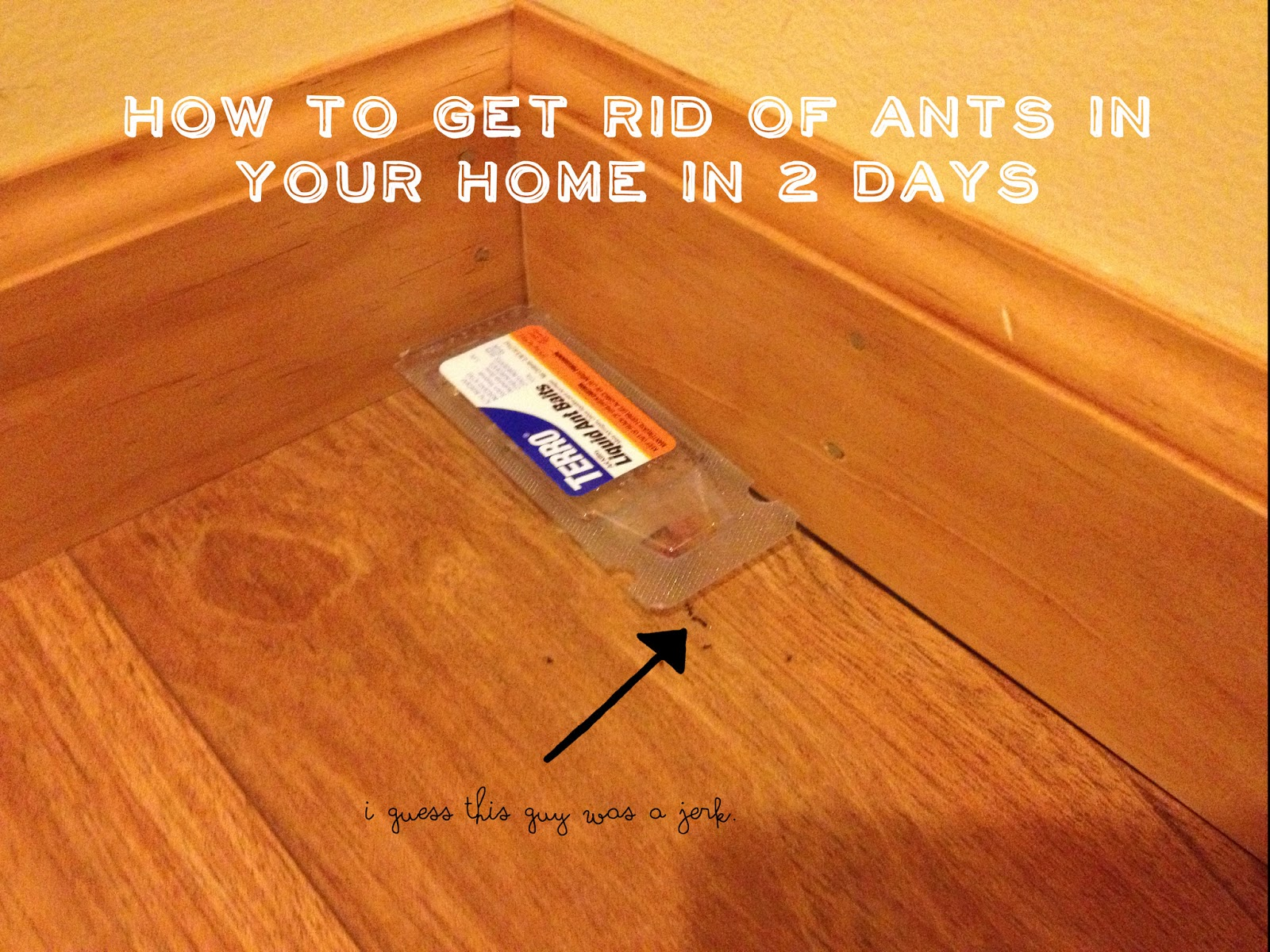 I have ants in my house - You Ll Possibly Have Reinfestations Throughout The Summer But I Usually Only Have To Do This Once Each Spring