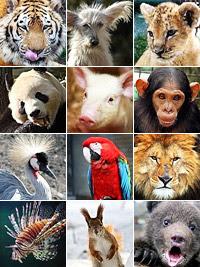 Фото Укринформ: фауна Земли