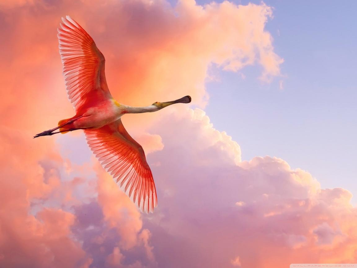 Exotic Birds Flying My...