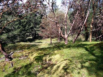 land on San Juan Island, rocks, moss, madrona, trees