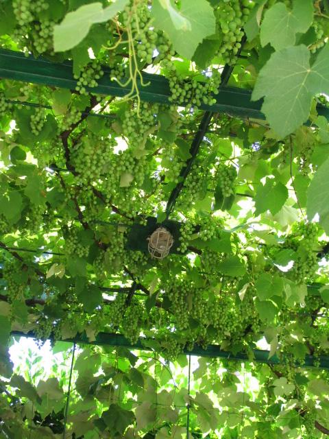 La magia di un piccolo orto apriamo le porte all 39 estate - Giardino in ombra ...