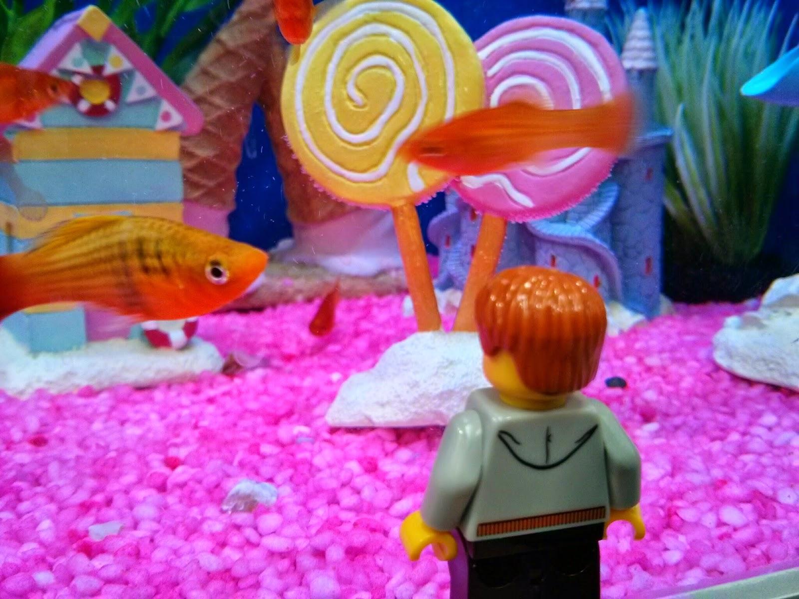 Kyle Emmett looking at swimming Fish
