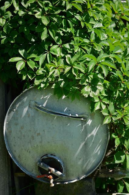 zapach zieleni i smak truskawek
