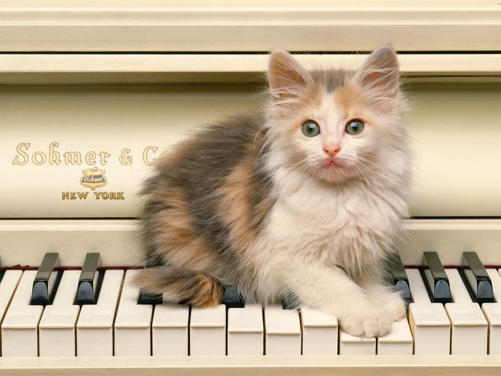 Image result for Cats and Cars