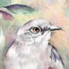 colored pencil drawing of bird in tree, copyright Rose Welty