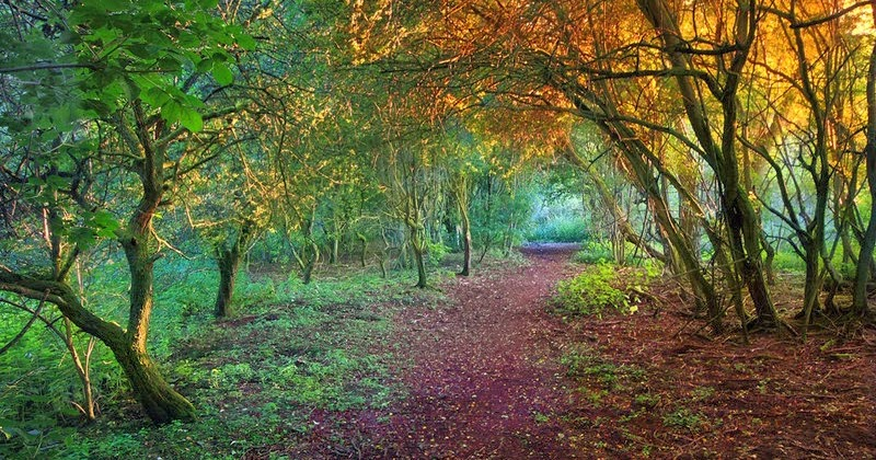 into the mound a samhain season tale