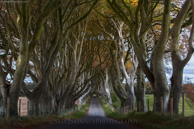 9. Wishing For - Dark Hedges, Ballymoney, Northern Ireland by Steve Skinner
