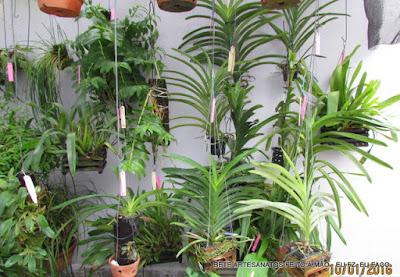 Orquideas replantadas
