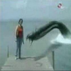 Ataque enguia gigante
