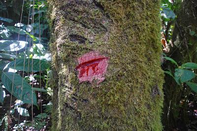 Lo que esconden los bosques Tomo I Sangre-de-drago