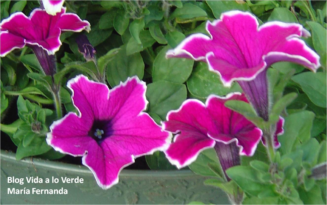 Vida a lo Verde*Living in Green*: El color de las flores es una ...