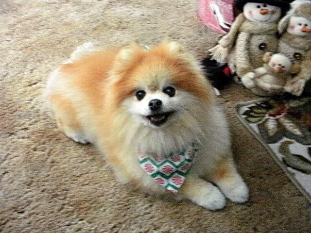 Tia loves her bandanna.