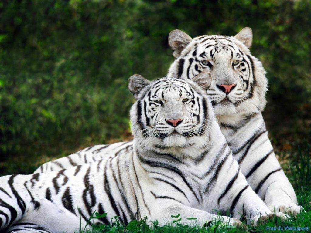 Beautiful Wild animals desktop wallpapers, photography , latest, cool ...