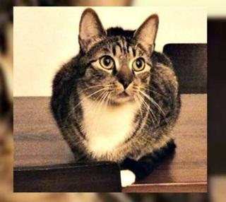 Sayembara Kucing Berhadiah 14 Juta Rupiah