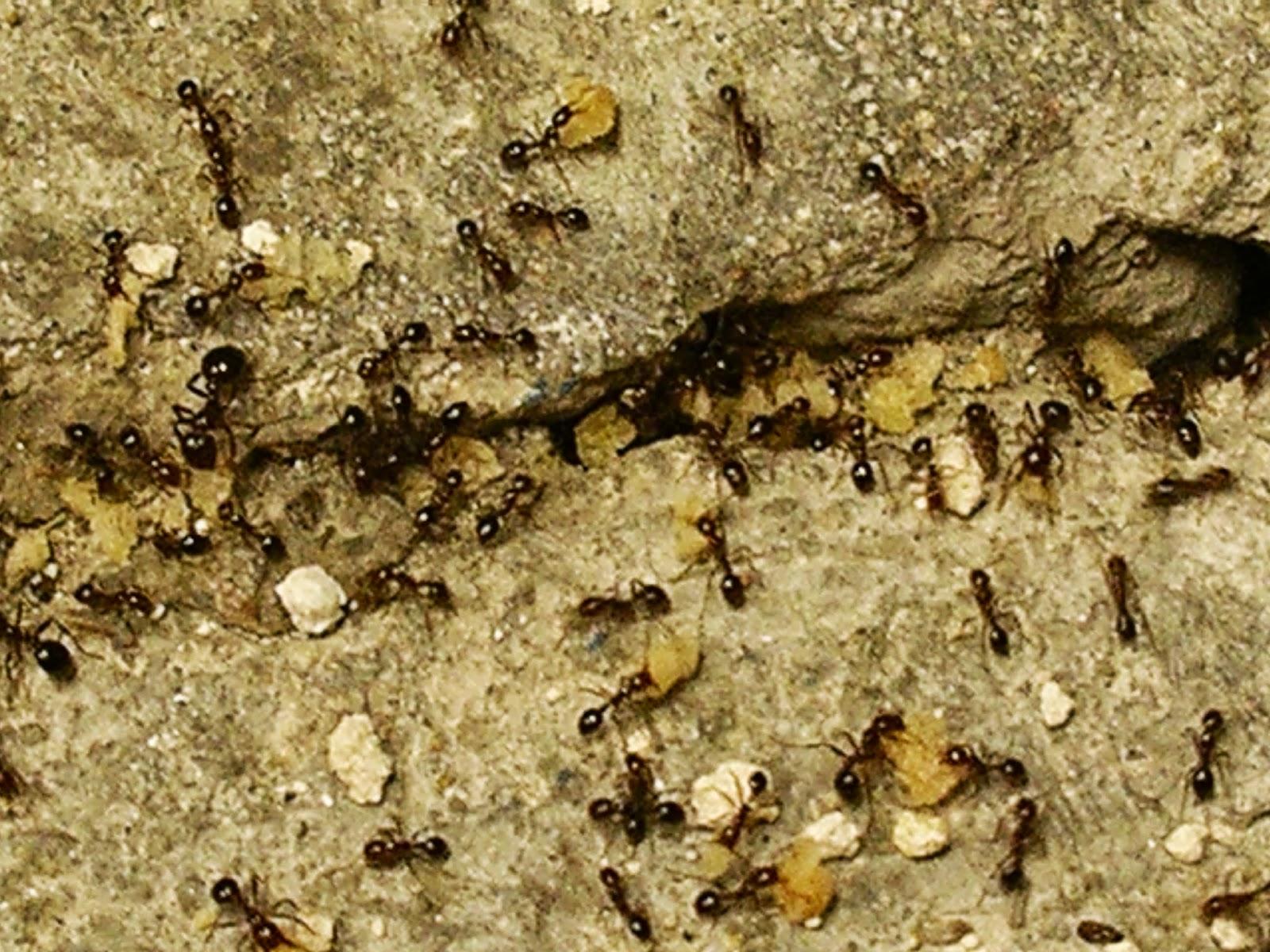 Какую отраву выбрать для муравьев 79