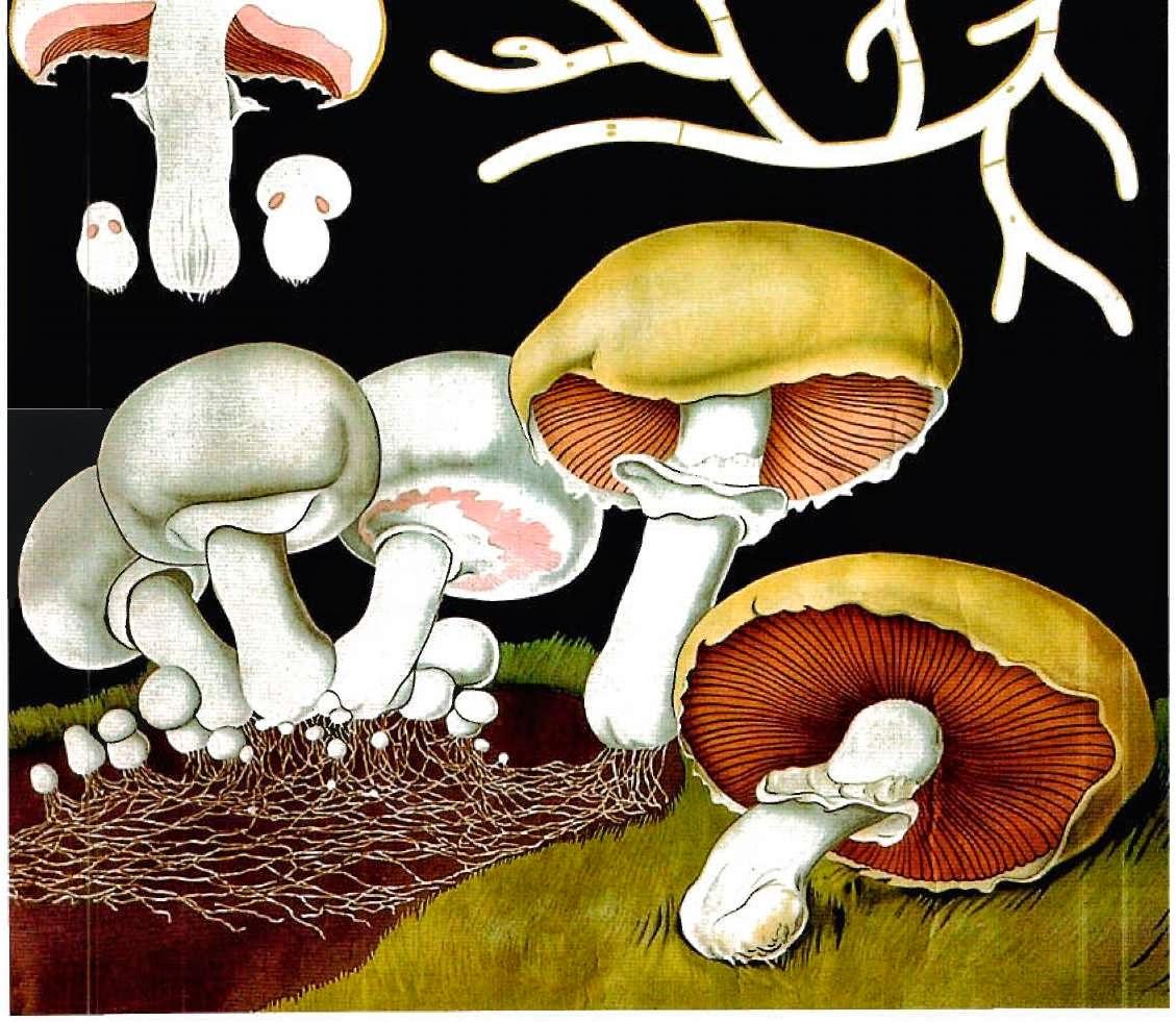 Biology essay... Any idea which fungus i should choose?