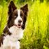 Ποιους σκύλους ονομάζουν έξυπνους οι Κτηνίατροι;