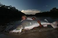 Piraiba Catfish