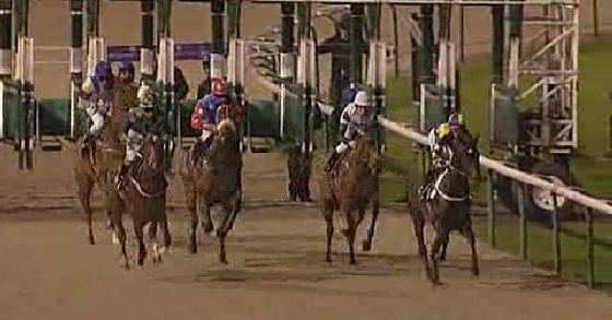 モンスターミュンシー初勝利のレース画像。スタート時。一番右、他の出走馬よりすこし前に出ているのがモンスターミュンシー