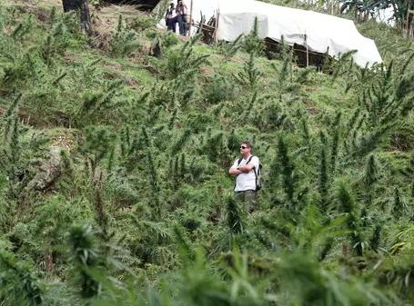 Próximo de se tornar o primeiro bilionário da produção da cannabis, o empresário Arjan Roskan falou ao site do Terra e apoiou movimento global pela legalização da maconha