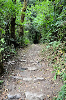 photo of hiking trail in Nehalem Oregon by Nancy Zavada