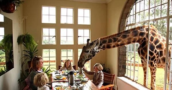pene de una jirafa