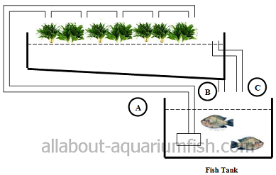 proposed aquaponic configuration