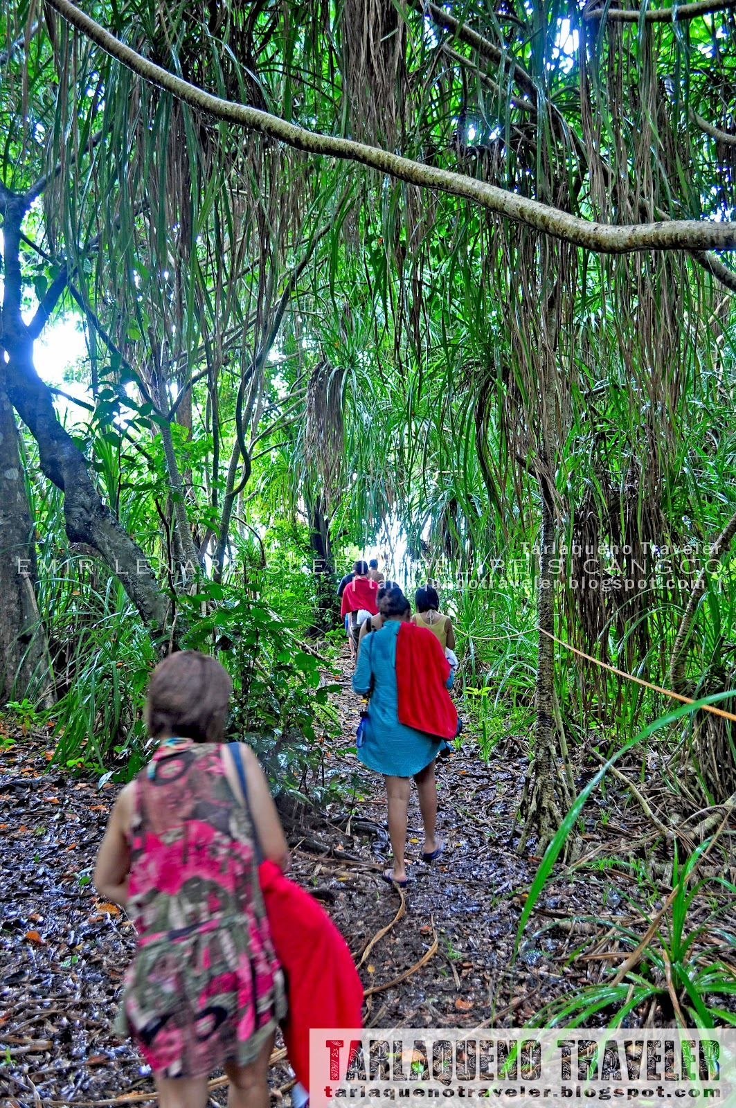 Mantigue Island Forest Trail