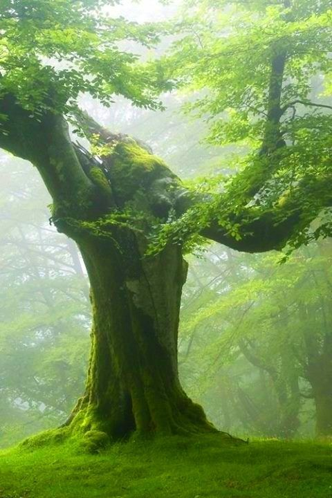 Amazing and Beautiful Old Tree