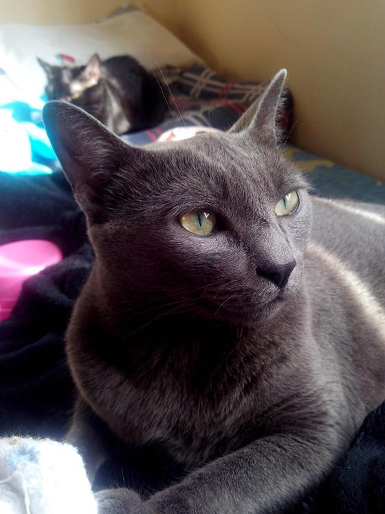Foto-do-gato-tirada-com-o-smartphone-Motorla-RAZR-D3