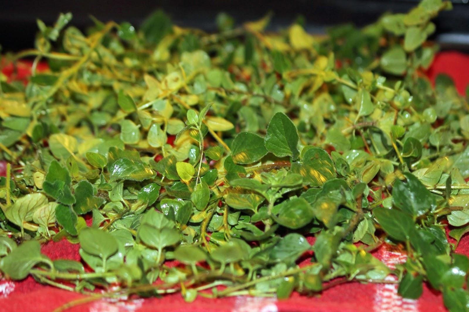 Starting an Herb Garden in FL